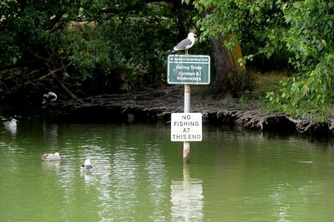 Potentially toxic algae present in Apex Park Lake   Burnham