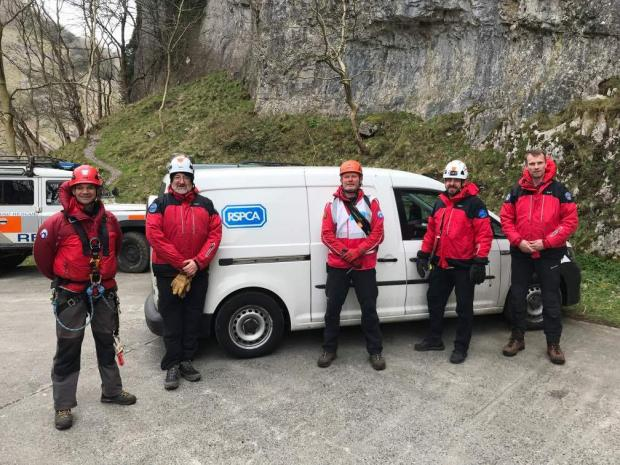 Burnham and Highbridge Weekly News: YOU'VE GOT TO BE KIDDING: Goats rescued after they became stuck on Cheddar Gorge. Pic: RSPCA