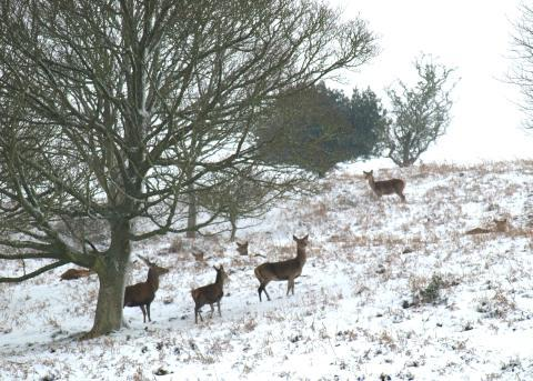 Burnham and Highbridge Weekly News: Snow on the Quantock Hills.