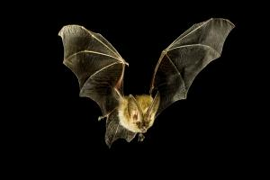 Batty about bats or mad about moths? Free guided walk around Apex Park in Highbridge