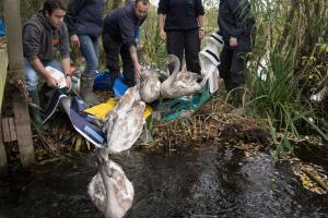 Secret World release swans into the wild