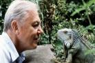 Sir David Attenborough at 90: 11 of his best moments to remember