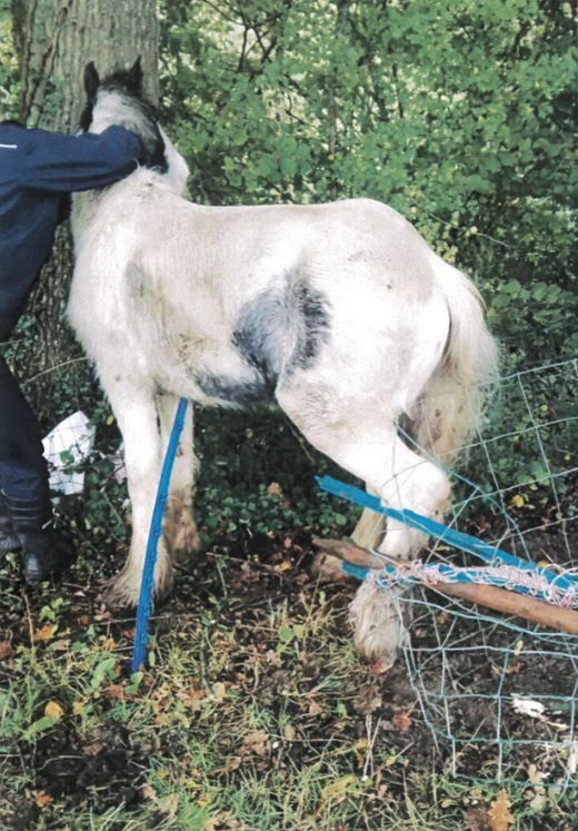 TRAPPED: Boyice as he was found by RSPCA inspectors