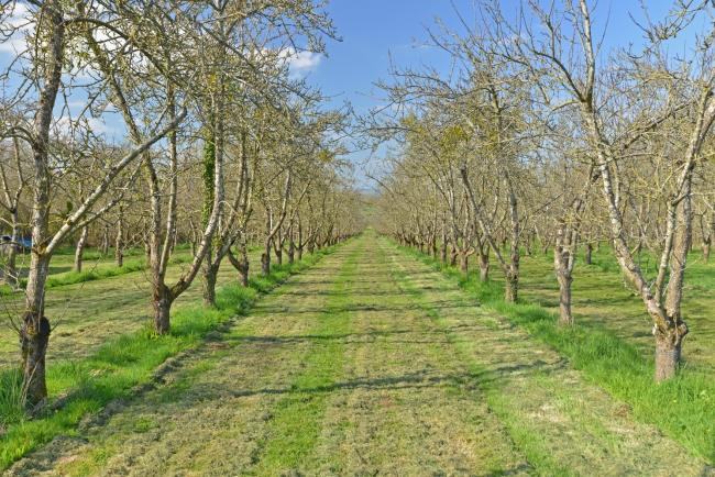 FOR SALE: Four Winds Orchard, West Lambrook